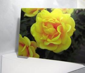 Bright Yellow Rose Greeting Card - Balboa Park Rose Garden, San Diego, California