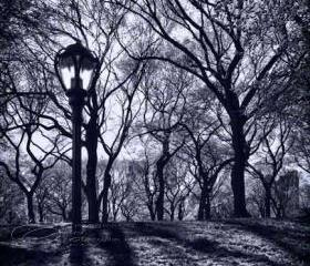 "Central Park New York photo black & white architecture 8x12"" print"