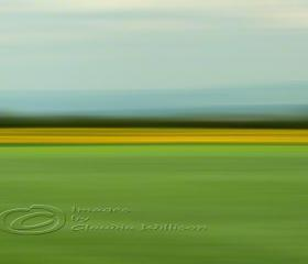 "Abstract Photo, fields of green, spring photo, yellow, green, 12x18"" print"