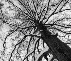 Tree Photo black & white abstract fine art print top 8x10""