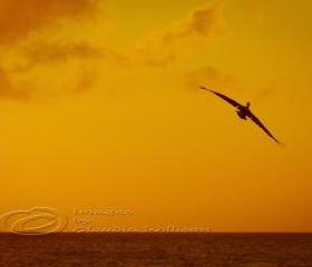 "Sunset photo beach ocean dream flying orange 8x12"" print"