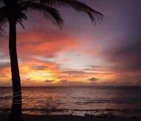 Sunset Photo ocean palm tree clouds purple orange print 5x7&quot;