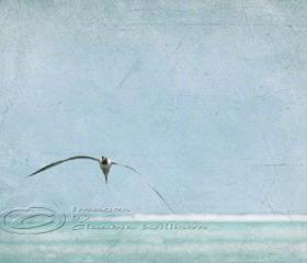 Flying seagull beach photo ocean grunge look teal print 8x12&quot;