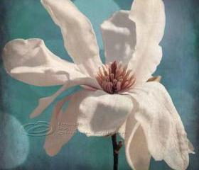 "Flower photo home decor white magnolia spring fine art, 12x12"" print"