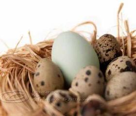 "Eggs nest Easter photo home decor fine art still life 8x12"" print"