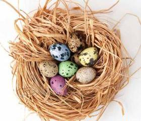 "Easter photo Eggs nest home decor still life pink yellow blue green 10x10"" print"