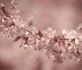Spring photo cherry blossoms home decor pale pink 8x12&quot; print