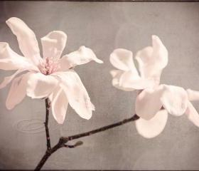 "Flower photo white magnolia home decor big wall art 20x30"" print"