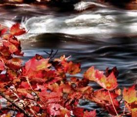 Season Photo fall photo artistic photo warm colors river 8x12&quot;