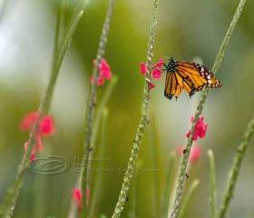 Butterfly photo, nursery art, flower photo, green, pink, orange, 8x8&quot; print