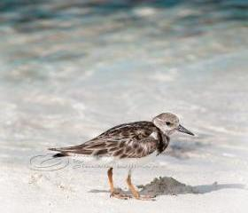 "Beach photo lonely bird ocean cute close-up teal 10x10"" print"