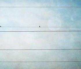 Bird on wire photo grunge teal whimsical print 8x12&quot;