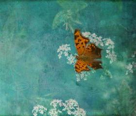 "Butterfly photo nursery decor art photo mint green orange white 8x10"" print"