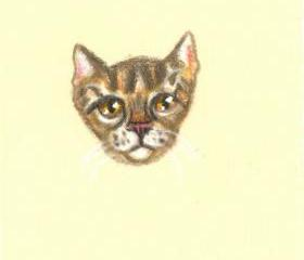 brown tabby colored pencil drawing OOAK original NOT a print