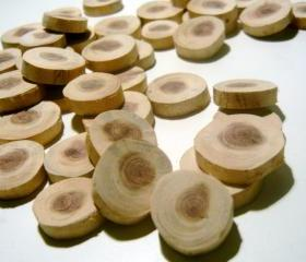 Cedar Wood Tree Branch Slices 150 piece Wholesale Lot