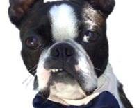 For Your Wedding To Include Your Awesome Pup or Kitty dog Bow Tie