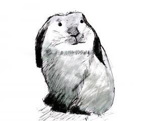 Bunny Rabbit Art Print Black and White Animal Ink Drawing Series