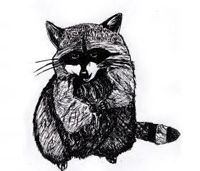Raccoon Print Black and White Animal Ink Drawing Series