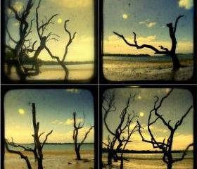 Driftwood Beach Trees Photo Set of Four - TtV 5x5 Island Landscape Photography Print - Nautical Beach Cottage Decor