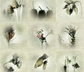 Botanical Art Print Set of 9 - Nature Photograghy - Woodland, Flora, Flower Photos - Shabby Chic Home Decor