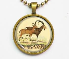 Animal Illustration Necklace - Couple of Beden Forsk - Altered Vintage Illustration Art