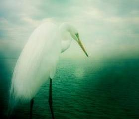 Bird Photography 5x5 Heron White Egret Photo - Soft Dreamy Wildlife Animal Print - Green Wall Decor