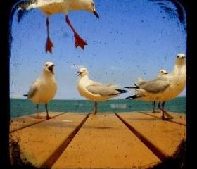 Bird Photo 5x5 Beach Seagulls Photograph - Avian Photography - TtV Rustic Vintage Style Home Decor Print