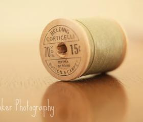 Cotton - 14x11 Fine art photograph