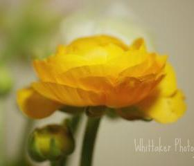 Yellow - 8x10 Fine art photograph