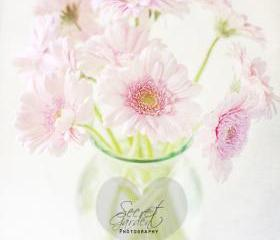 Pink Gerberas In A Vase {Light Textured Version}