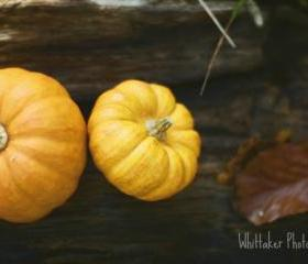 Pumpkin Patch - 12x12 fine art photograph