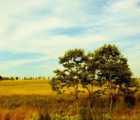Golden Battlefield - 8x10 fine art photograph