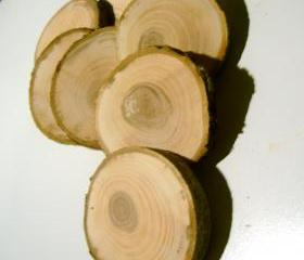 15 Tree Branch Wooden Slices 2- 3 inch Branch Pieces