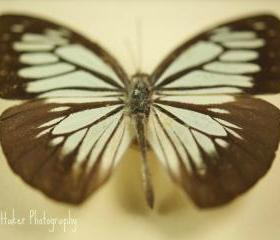 Butterfly Effect - 12x12 fine art photograph
