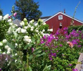 Garden, Black Dog Tavern - Martha's Vineyard, MA