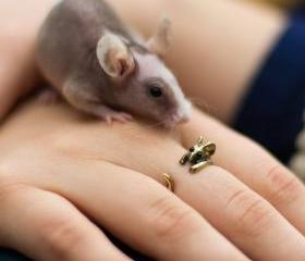 Cute Bronze Adjustable Little Mouse Ring