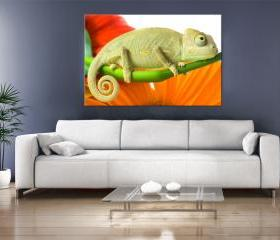 24x17 Digital printed Canvas colorful chameleon to your wall (size: 24x17 inch plus border).
