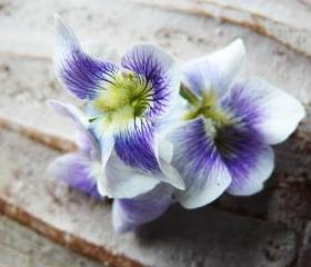 15x11 Digital printed Canvas vintage flower to your wall violet flower (size: 15x11 inch plus border).