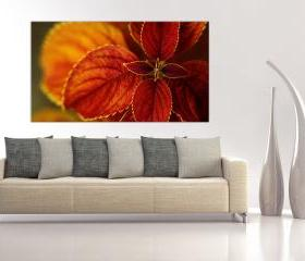 16x10 Digital printed Canvas red flower to your wall, red-claret botanical flower (size: 16x10 inch plus border).