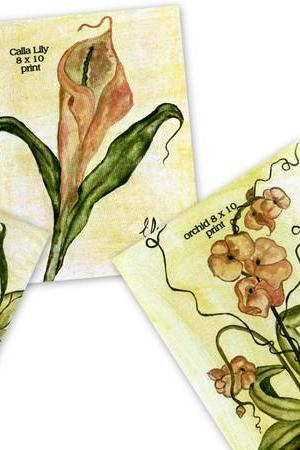 Set of 4 Botanical Prints 8 x10 signed by Artist