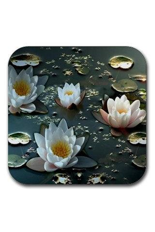 White Water Lilies and Pads Rubber Square Coasters Set 11707751 Made to Order Custom Design Available