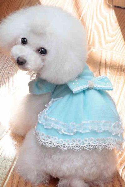 Lace Dress Dog Clothes