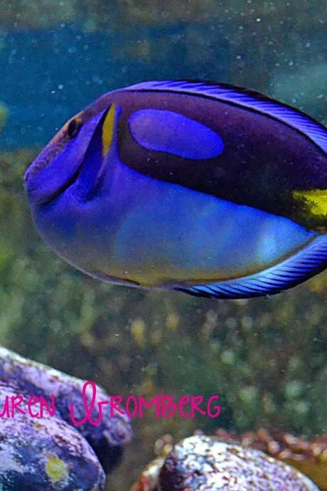 Dory, Just Keep Swimming, Blue Tang 8x10 inch Photo Print