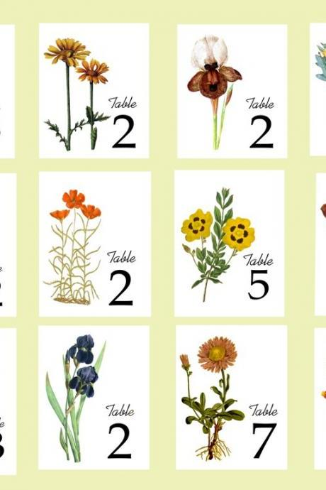 Autumn Floral Table Cards, Vintage Illustrations as Table Numbers