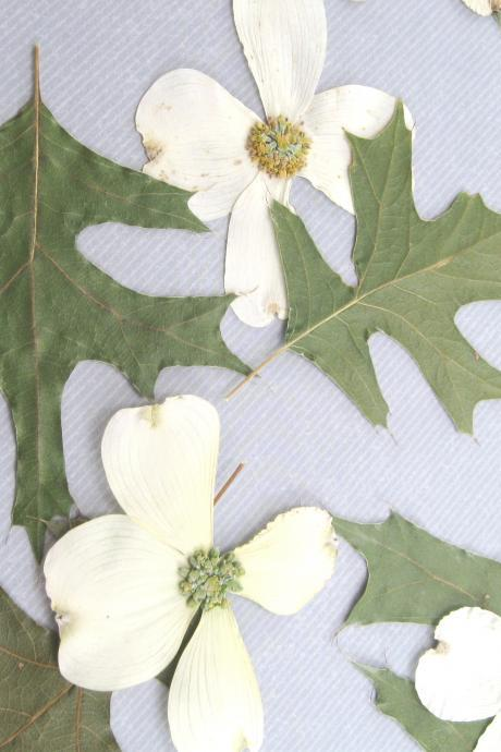 Woodland Leaves with White Accents, Green Leaves with white flowers, Qty of 60, real leaves for table decoration